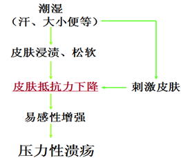 压力性溃疡的基础理论(三)图1-10